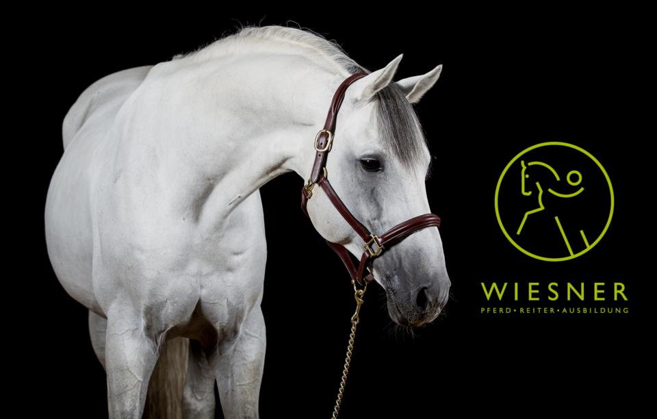 weißes Pferd mit Wiesner-Logo Pferd - Reiter - Ausbildung